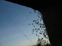 Baby_spiders_1