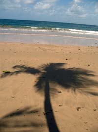 Tree_and_sea